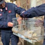 Caccia: due denunciati per maltrattamenti nel Crotonese