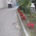 Detenuti piantano stelle di Natale Ail al carcere di Catanzaro