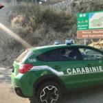In auto con esemplari morti fauna selvatica protetta, denuncia