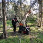 Due palmesi arrestati per furto aggravato di legna dai Carabinieri