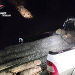 Trafuga legna in terreno privato: arrestato 50enne