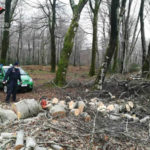 Sorpreso a tagliare e trafugare legna nel parco d'Aspromonte denunciato