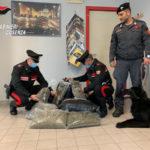 Droga: sorpresi in casa con 15 chili di marijuana, arrestati nel Cosentino