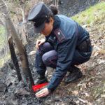 Incendio: appicca fuoco per pulire tetreno, denunciato
