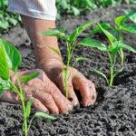 Regione: Gallo, nuovo bando per l'agricoltura biologica
