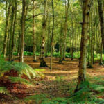 Regione: pubblicata graduatoria definitiva Psr forestazione