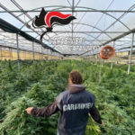Droga: 10mila piante cannabis in vivaio nel Catanzarese, arresto