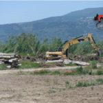 Lamezia: taglio pioppeto in zona con vincolo paesaggistico