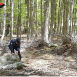 """Ruba legname nel parco della Sila, """"catturato"""" da foto trappole"""