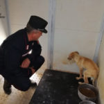 Cane ferito salvato da Carabinieri nel Cosentino