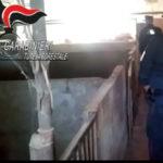 Canile-lager scoperto a Catanzaro, denunciato un uomo