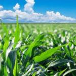 Emergenza Covid - 19: la Regione a sostegno dei consorzi di bonifica