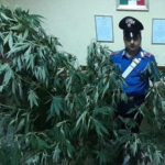 Controlli antidroga a Squillace, un arresto