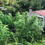 Droga: sessantacinquenne girifalcese arrestato dai Carabinieri