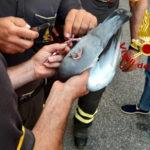 Catanzaro: Piccione soccorso dai Vigili del Fuoco