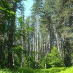 Dal Psr un milione di euro per i piani di gestione dei siti Natura 2000