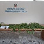 Coltivava illegalmente marijuana nel centro cittadino arrestato