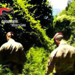 Droga: scovata piantagione marijuana nel Reggino