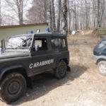 Sorpresi a razziare piante di leccio in un bosco privato, arrestati