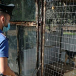 Scoperto un canile abusivo che ha portato alla denuncia dei proprietari