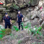 Droga a San Luca: i carabinieri scoprono altre due piantagioni