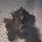 Lamezia: comune denuncia vile gesto contro gattino reciso e dato alle fiamme