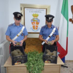 Droga:deteneva marijuana e animali protetti,arrestato