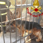 Catanzaro: pastore tedesco soccorso dai Vigili del Fuoco