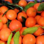 Coldiretti Calabria, nella sibaritide crisi profonda per le clementine