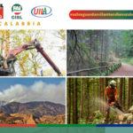 Forestazione: Flai Cgil, Fai Cisl e Uila Uil chiedo incontro regione