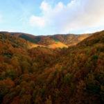 Parco Nazionale della Sila: Giornata Nazionale degli Alberi