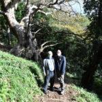 Platano Curinga, De Caprio: «la biodiversità è una ricchezza da tutelare»