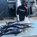 Pesca: sequestrati centinaia piccoli esemplari pesce spada