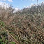 Lamezia: Piccioni appello pulizia Cantagalli