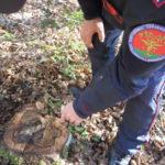 Furto di legna, arrestati due diciottenni nel Catanzarese