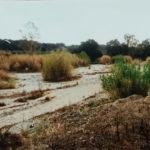Marcello Anastasi. Interrogazione sulla situazione del fiume Marro