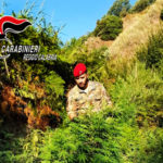 Grotteria: rinvenuta una piantagione di canapa indiana nana
