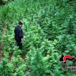 Contrasto alla droga nella piana di Gioia Tauro